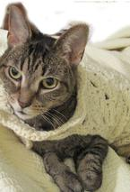 Cat Couture Wrap Pattern