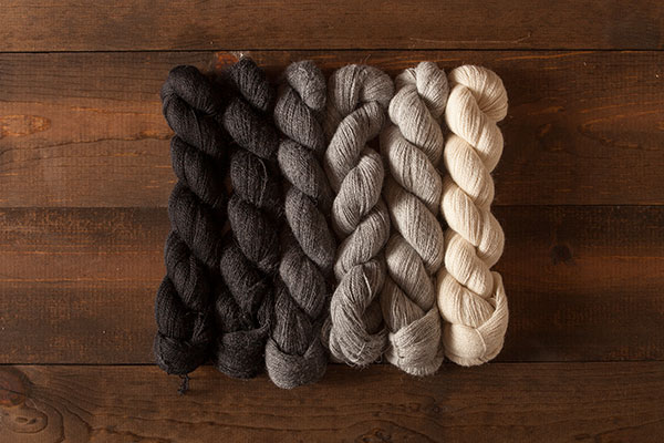 Aristocratic Alpaca Cloud Sampler