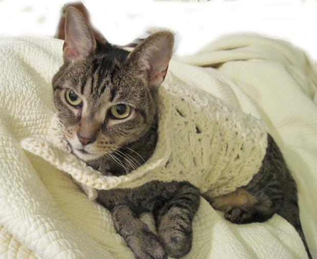 Free Crochet Pattern Cat Sweater : Cat Couture Wrap - Knitting Patterns and Crochet Patterns ...