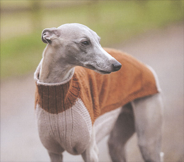 Sweaters For Dogs From Knitpicks Knitting By Debbie Humphreys